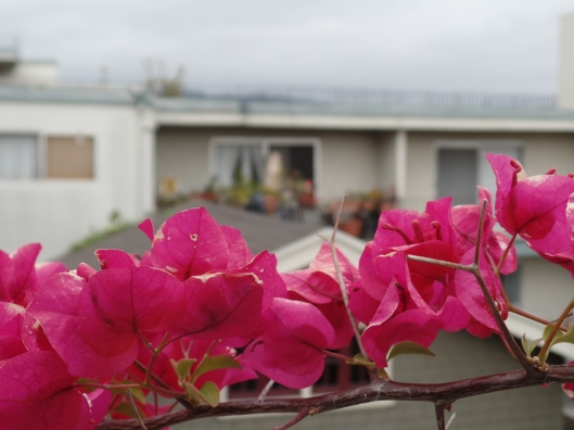 Bougainvillea and Building